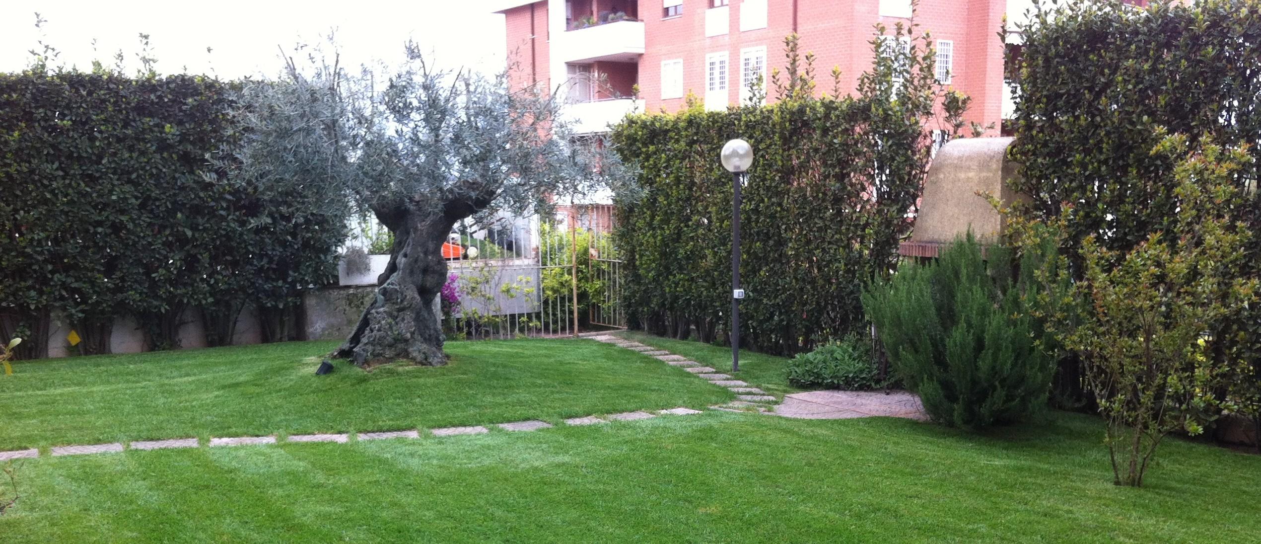 Verde ambiente vivai via pietro cuppari 32 roma eur for Progettazione giardini roma